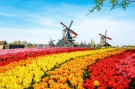 Kinh nghiệm xin visa du lịch Hà Lan