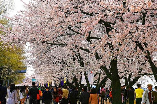 Khám phá những lễ hội hấp dẫn nhất tại Hàn Quốc